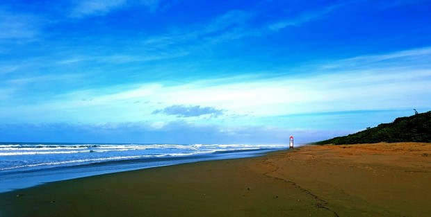 spiaggia mare e bosco